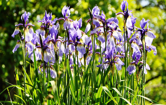 Sonnengew chse schattenpflanzen erstes aachener - Schattenpflanzen garten ...